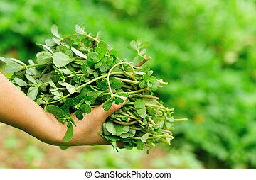 Mujer recogiendo hierbas en el jardín