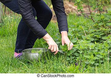 Mujer recogiendo ortigas en el jardín