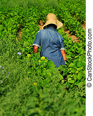 Mujer trabajadora en la granja