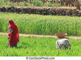 Mujeres de granja