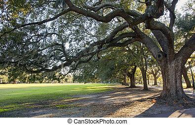 musgo, árboles, parque, roble, sabana, español