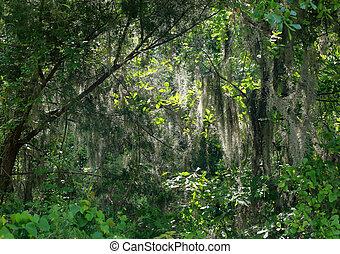 Musgo español en los árboles en un bosque de Georgia
