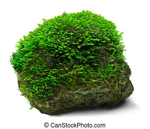 musgo, roca