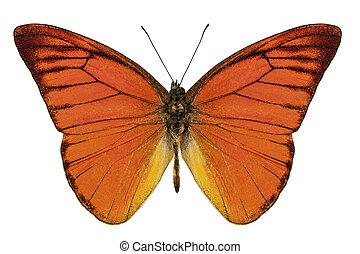 """naranja, especie, plano de fondo, appias, aislado, mariposa, neronis, nero, albatross"""", """"orange, blanco"""