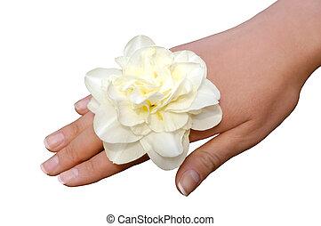 Narciso blanco a mano de mujer aislado