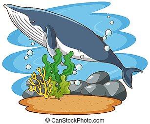 natación, ballena, mar