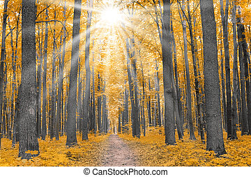 Naturaleza. Bosque en otoño