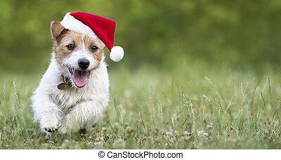 navidad, corriente, feliz, tela, mascota, santa, perro, perrito, feriado, bandera