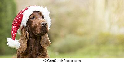 navidad, espacio, sombrero, tela, santa, lindo, perro, copia, bandera