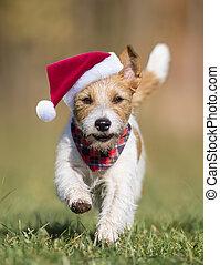 navidad, feliz, perro, santa, divertido, corriente