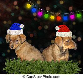 navidad, perritos, celebrar, dos