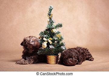 navidad, poco, perritos, dos, árbol