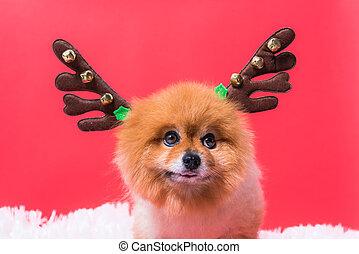 navidad, reno, venado, retrato, divertido, chihuahua, primer plano, perro, disfraz