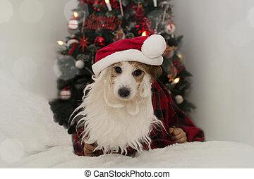 NAVIDAD SANTA DOG. Jack Ruby llevaba barba, sombrero rojo contra las luces de Navidad.