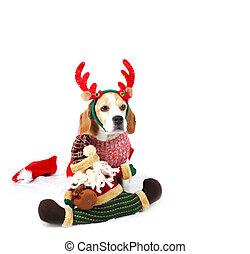 navidad, santa, perro