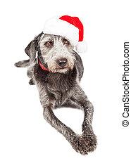 Navidad Santa terrier perro acostado
