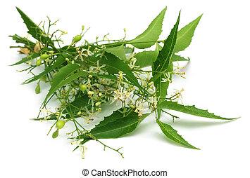 Neem medicinal se va con flores