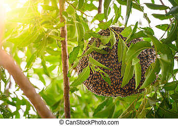 neem, thailand., rama, nido, árbol, siamés, jardín, abejas