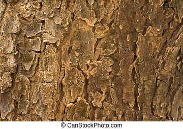 Neem Tree (Azadirachta Indica) ladrar textura cerca