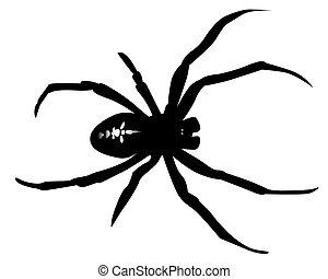 negro, araña, silueta