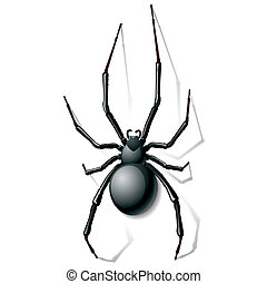 negro, araña, viuda