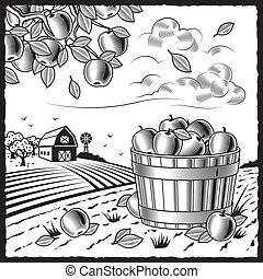 negro, cosecha, paisaje, manzana