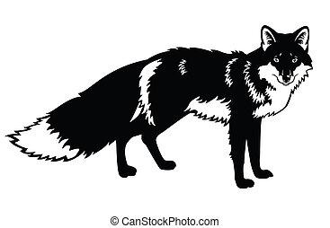 negro, zorro, blanco