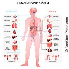 nervioso, gráfico, realista, sistema