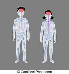 nervioso, humano, sistema