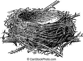 Nest of Blackcap o Sylvia atricapilla, grabado añejo