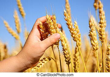 Niño sosteniendo trigo