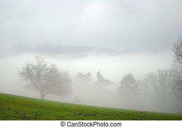 niebla, árboles