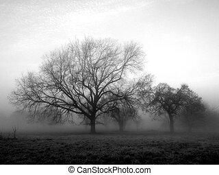 niebla, afuera