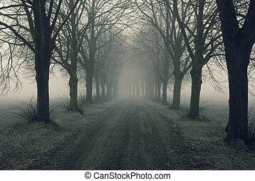 niebla, avenida