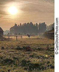 niebla, caballo