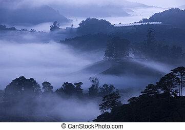 Niebla matutina en la granja de té.