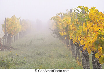 niebla, wineyards