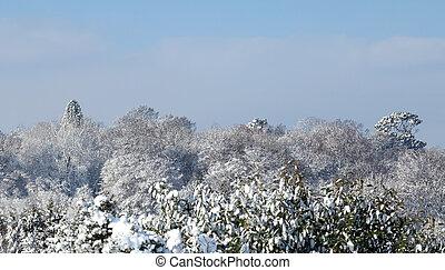 Nieve de madera Ashurst