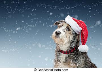 nieve, perro, espacio de copia, navidad, santa