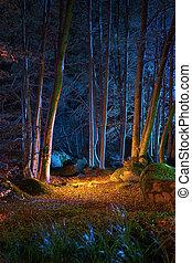 noche, bosque, magia
