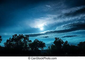Noche de luna llena en el bosque