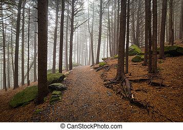 norte, excursionismo, appalachian, mou, rastro, roan, bosque, aire libre, carolina