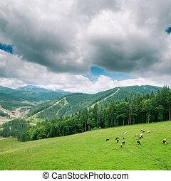 Nubes bajas sobre la montaña