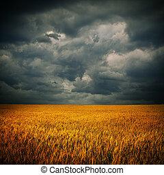 Nubes oscuras sobre el campo de trigo