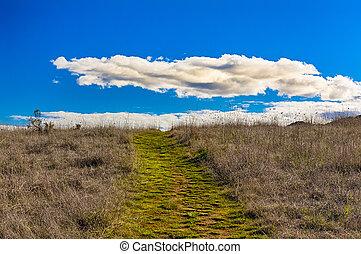 nubes, primero, hinchado, verde, horizonte, trayectoria, blanco