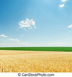 Nubes y campos de luz con cosecha de oro y plantas verdes