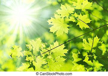 Nueva hoja y rayos solares