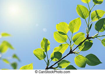 Nuevas hojas verdes a la luz del sol
