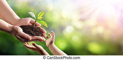 nuevo, planta, joven, ambiental, generación, viejo, dar, mujer, niño, protección