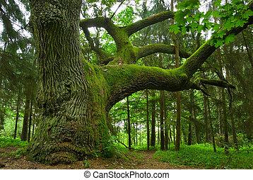 oak., grande